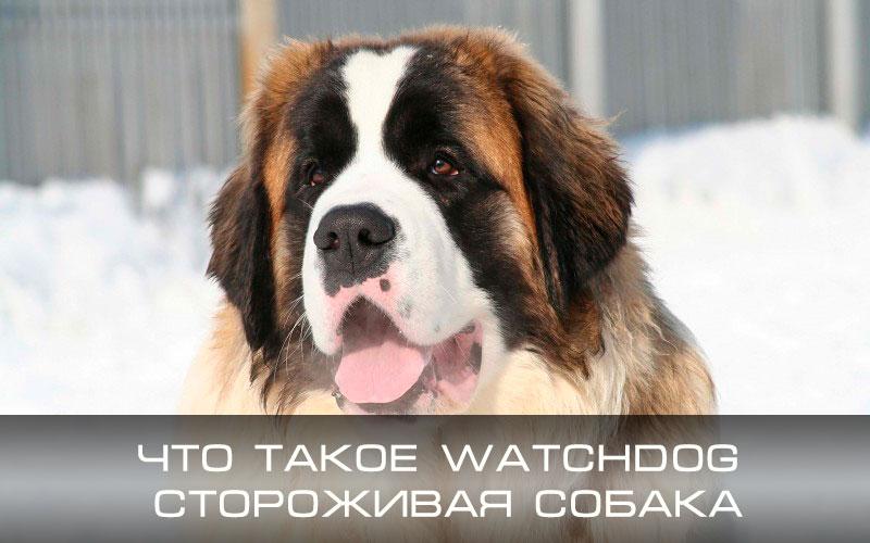 Что такое Watchdog